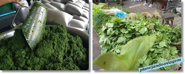 Belem - Mercado Ver o peso - Maniçoba e Jambu
